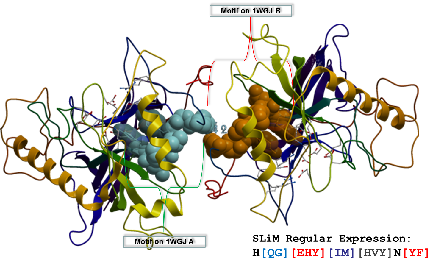 CaM-Binding-Protein